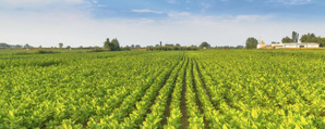Planting Condition and Weather, Major Factors for Food Supply