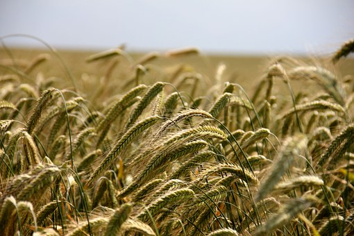 The 'Slashing Agricultural Economy' Of The U.S. Mourns The Exit From TTP