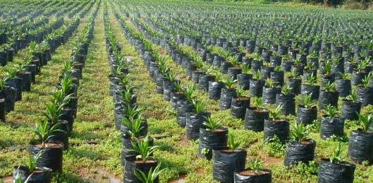 Sustainable sourcing of palm oil is one challenge, labelling and selling it to consumers another.