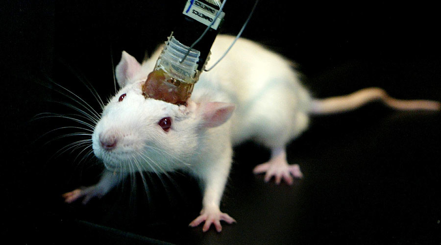 Research Study Allows Scientists To Control Mice Brains In a Wireless Manner