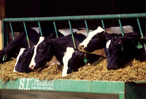 Why dairy surplus in the US is a bad sign for Europe