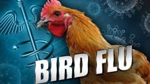 Bird Flu Scare in U.S. Forces Asian Nations to Restrict U.S. Poultry