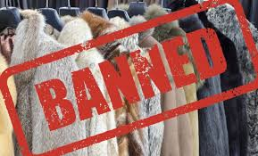 Parliamentary Committee Report Urges Public Consultation For Banning Fur In UK