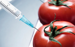 The US and Europe: On the Threshold of GMO War