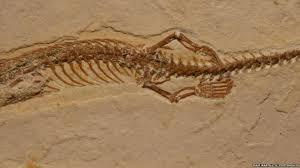Controversy Over Claimed Discovery of Oldest Snake With Four Legs