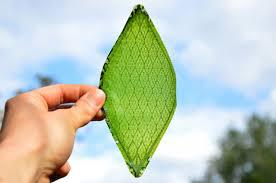 Silk Leaf To Produce Oxygen Artificially