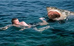Electronic Shark Deterrents to be tried out in Australia Following Shark Attacks