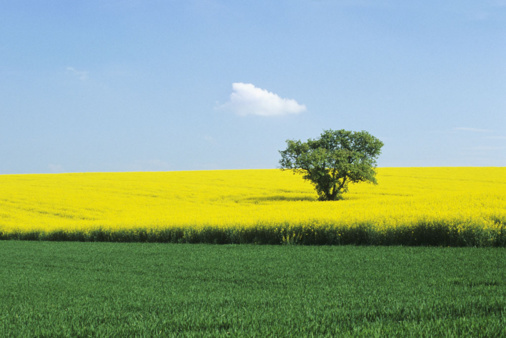 European Parliament Votes Down GM Crops Proposal