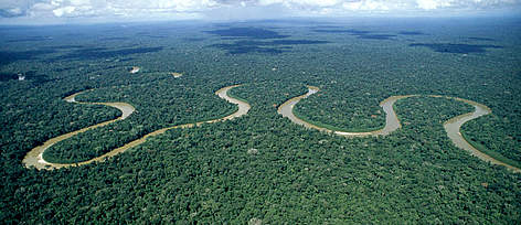 Scientists Claim Half of Tree Species in the Amazon at Risk of Extinction