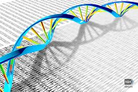 DNA Sequencing Project Proposed For All Complex Life Forms On Earth By An Int'l Team