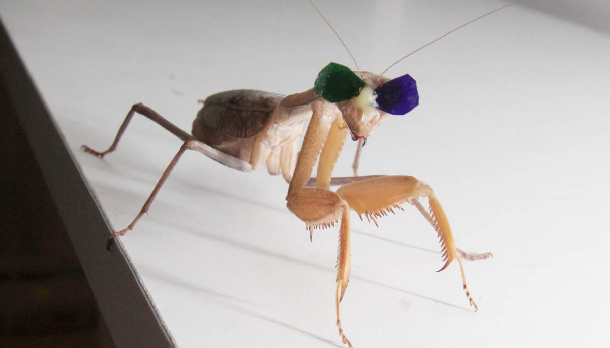Insects' Present Their 'Point Of View' In 3D Vision