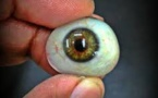 Smart And Adaptive Artificial Eye Developed By Researchers At Harvard