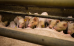 African swine fever at Europe's borders: time for an embargo?