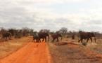Zimbabwe to issue elephant hunting licences to combat economic crisis