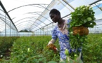 Smart Farming takes root in South Africa