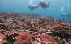 CO2 Emission Is Proportionate To The Damages Of Marine Ecosystem, Reports Recent Studies