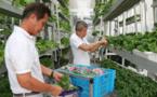 Vertical Farming Steals The International Design Award