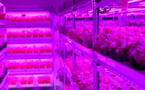 """Panasonic to Invest in """"High-Tech Vegetables"""""""